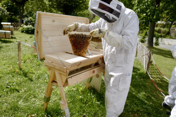 stage apiculture eco responsable ile de france